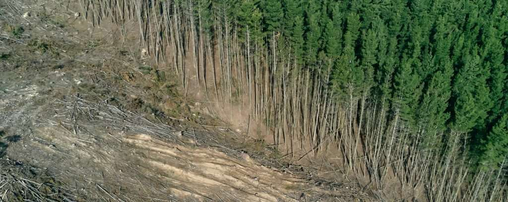 An image symbolising deforestation. Related to a blog post on deforestation leakage, a situation where measures to protect forests lead to a shift of deforestation to somewhere else.